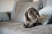 CUTE BUNNY ON THE SOFA