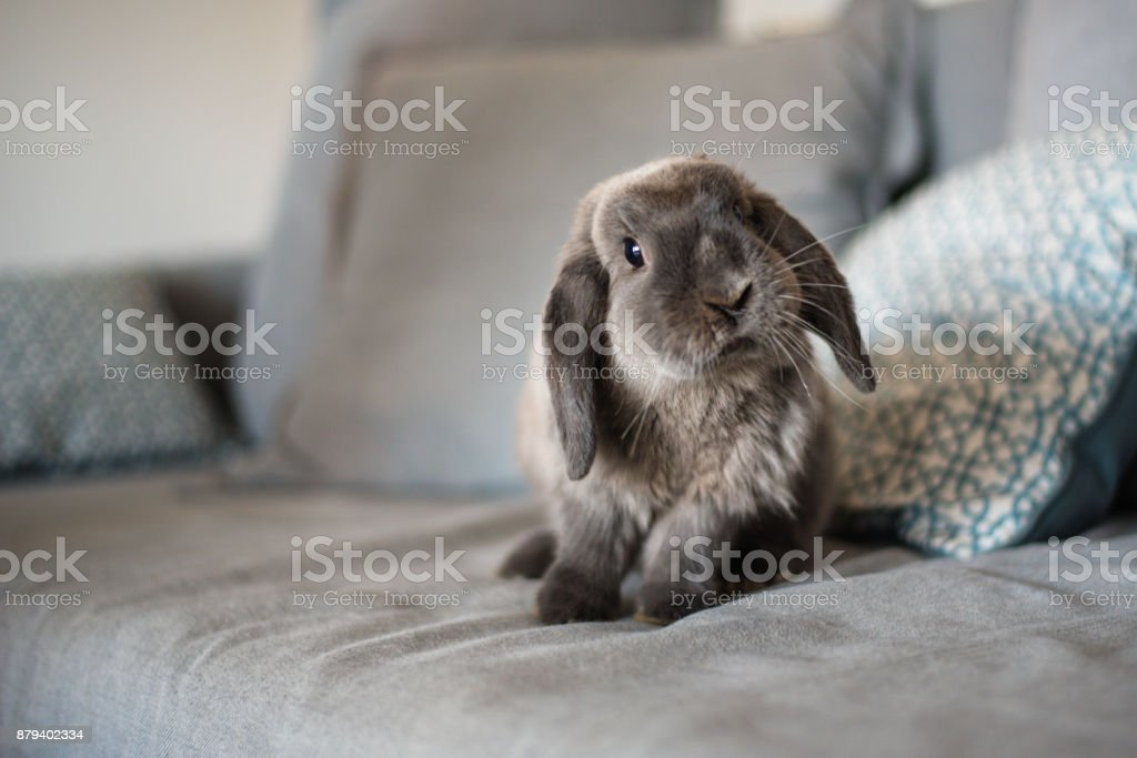 CUTE BUNNY ON THE SOFA stock photo