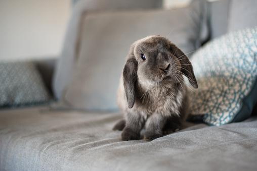 Kanepede Sevi̇mli̇ Tavşan Stok Fotoğraflar & ABD'nin Daha Fazla Resimleri
