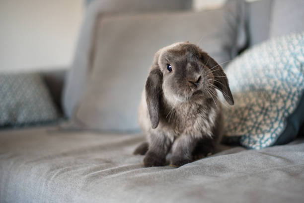cute bunny on the sofa - cute stock pictures, royalty-free photos & images