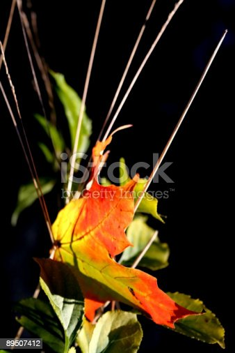 istock MAPLE LEAF ABSTRACT 89507412