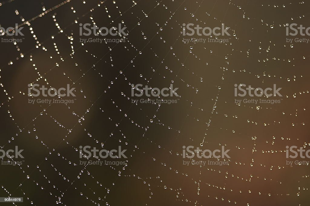 SPIDER WEB 2 royalty-free stock photo