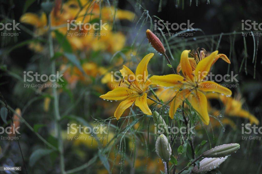 Теплое  лето в деревне,  натюрморт  из овощей, цветы stock photo