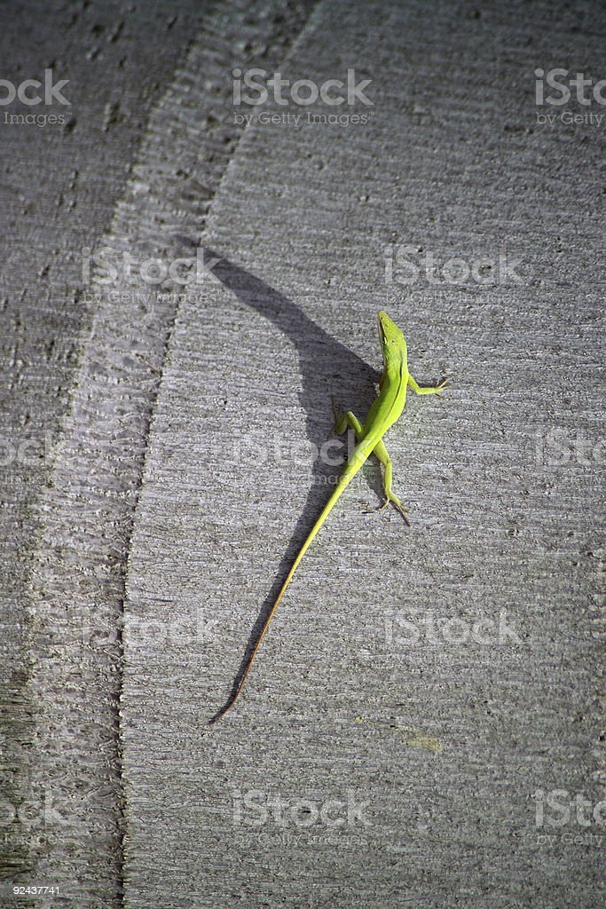 CHOICES A LIZARD MIGHT MAKE royalty-free stock photo