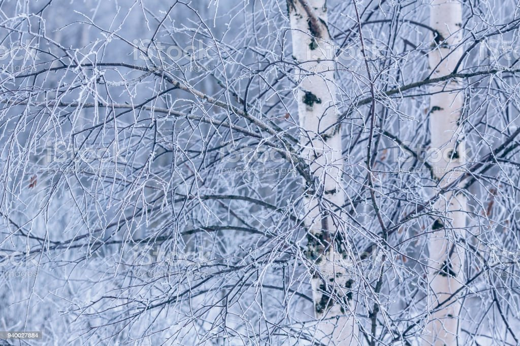 Зимний лес royalty-free stock photo
