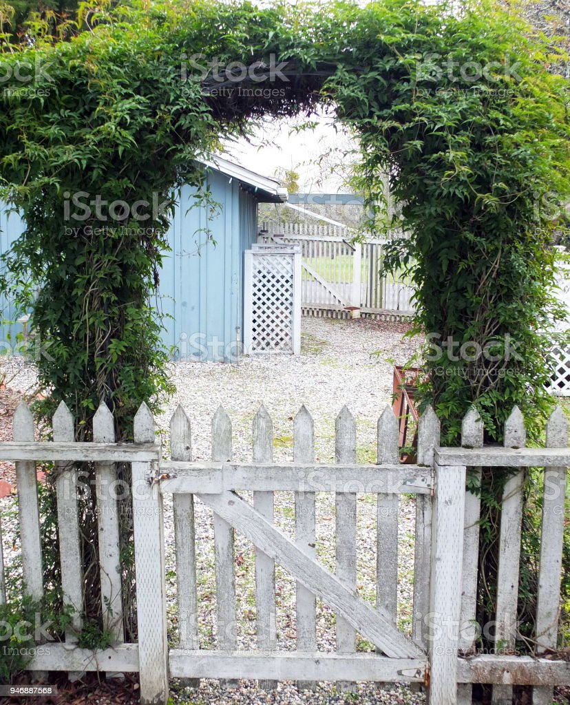 JASMINE ARCHWAY OVER WHITE PICKET GATE stock photo