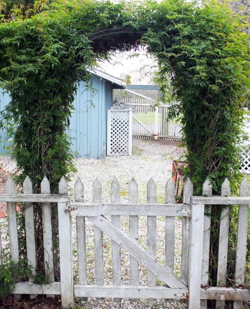 JASMINE ARCHWAY OVER WHITE PICKET GATE stock photo