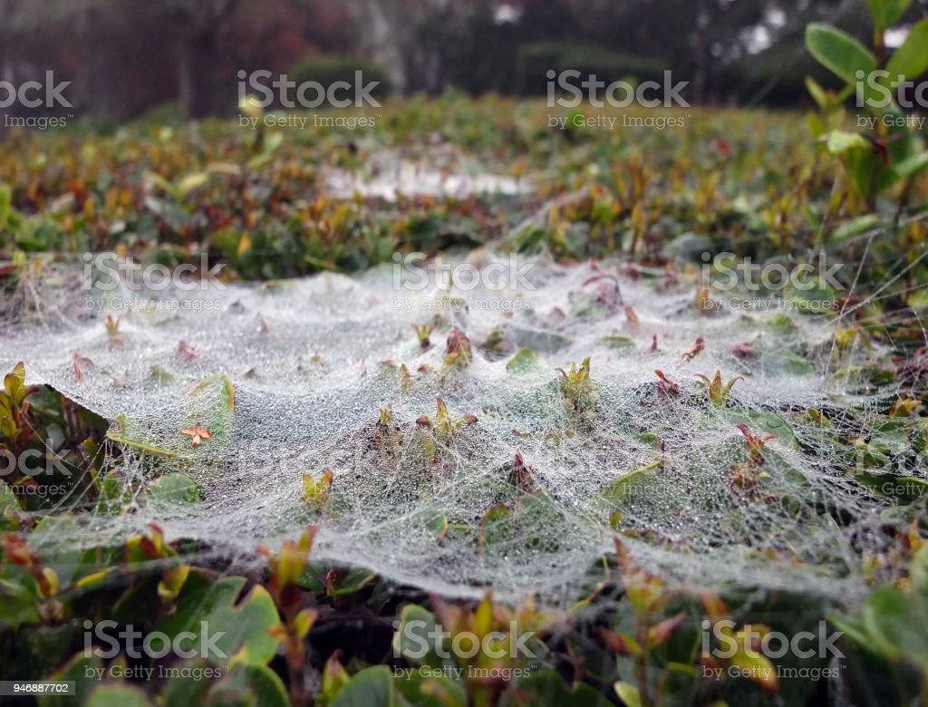 GLITTERING DEW ON SPIDER WEB stock photo