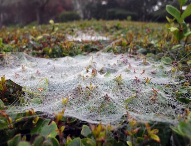 GLITTERING DEW ON SPIDER WEB stock photo