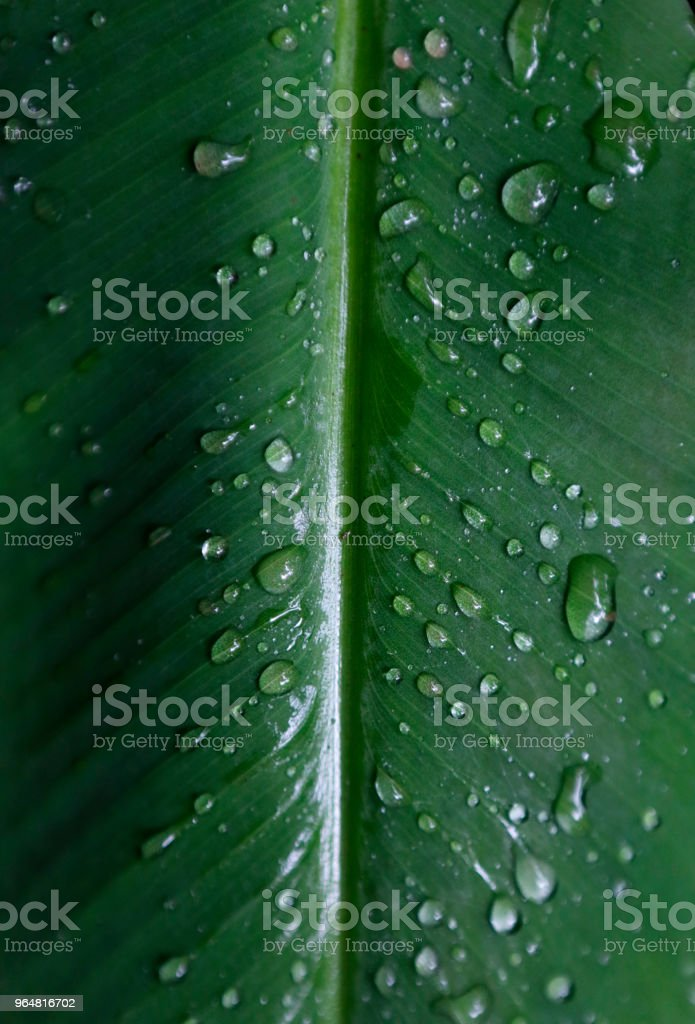 THAILAND-DROPLET/ royalty-free stock photo