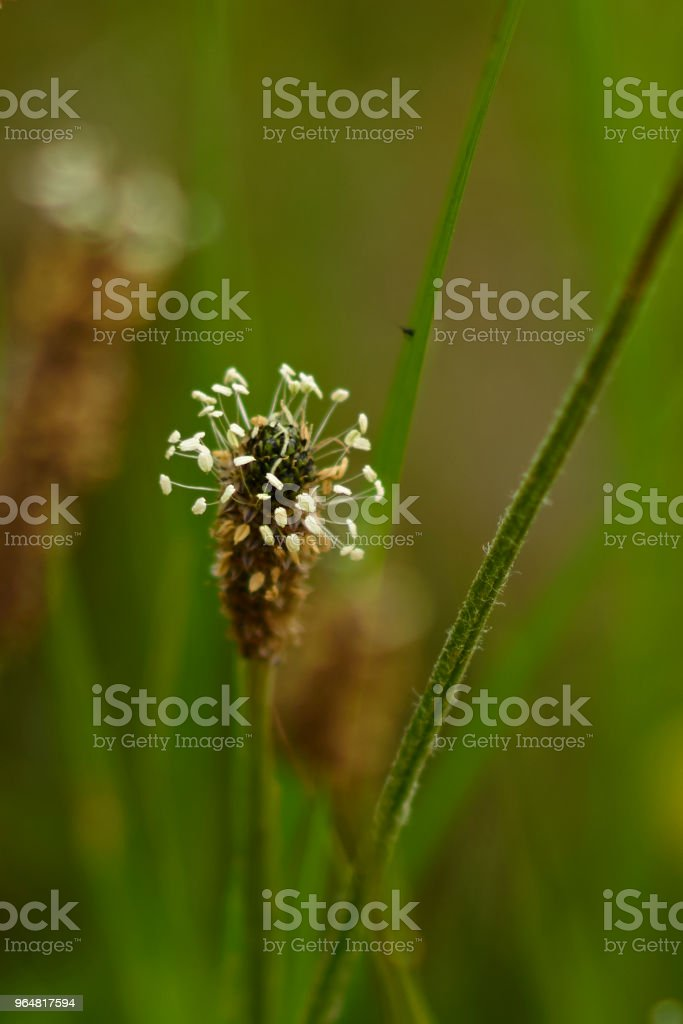 MACRO WEEDS PAUL HUMBER RIVER BANK NEAR HULL YORKSHIRE royalty-free stock photo