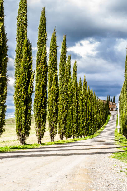 IDYLLIC TUSCANY LANDSCAPE WITH CYPRESS TREES. TOP ATTRACTION IN ITALY. FAMOUS TRIP DESTINATION stock photo