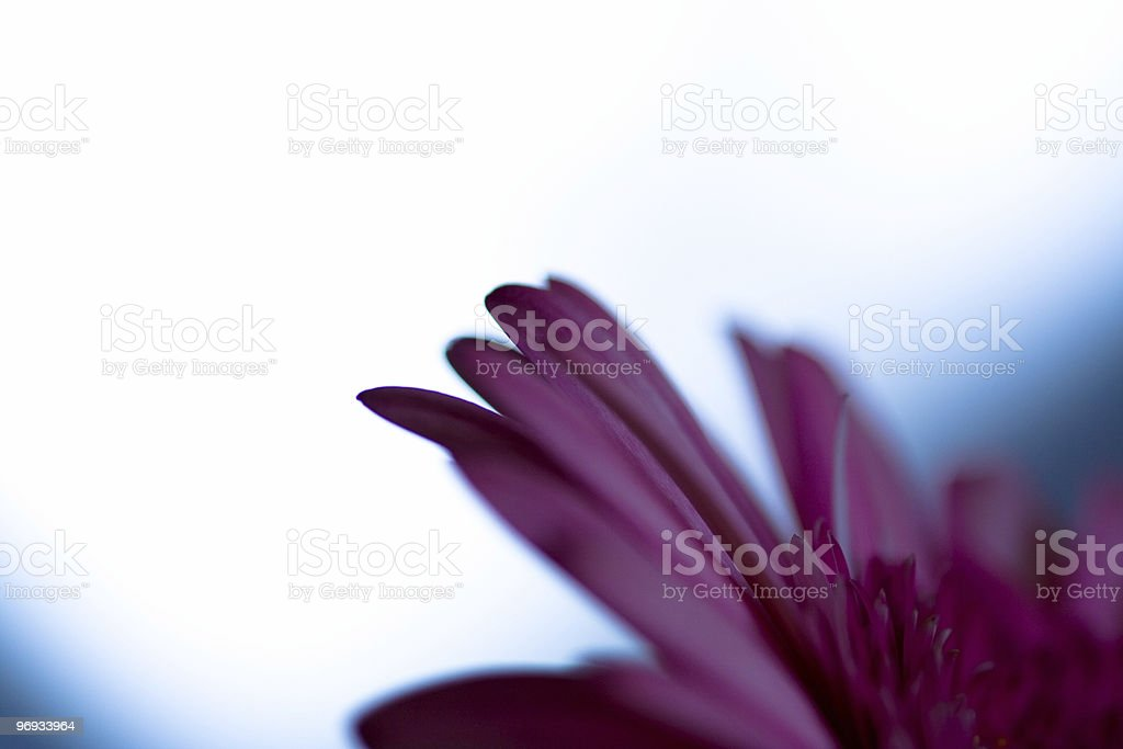PINK FLOWER ABSTRACT royalty-free stock photo