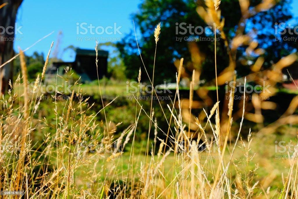 GRASSY VIEW stock photo