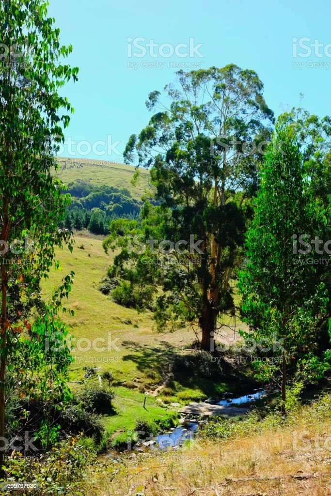 LANDSCAPE WITH GUMS stock photo