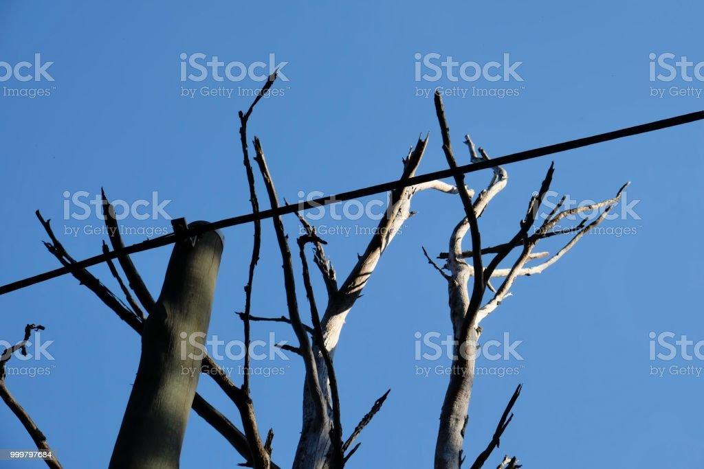 TREE AND EX TREE stock photo