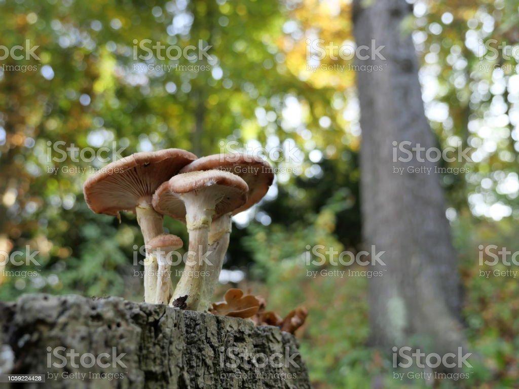 0519_small Gruppe von Pilzen auf einem Baumstumpf vor einem farbigen Hintergrund – Foto
