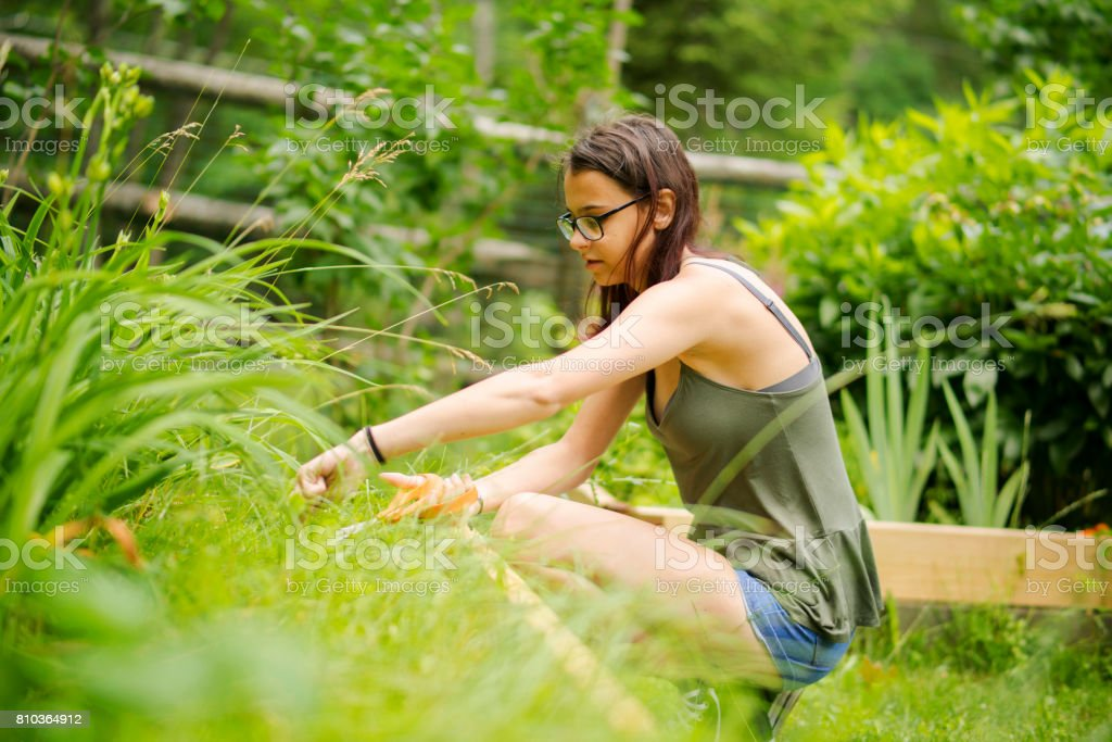 15-years-old teenager girl gardening at the backyard, cutting the weeds at the flower bed stock photo