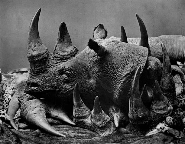 19 ème siècle chasse illégale de rhinocéros - Photo