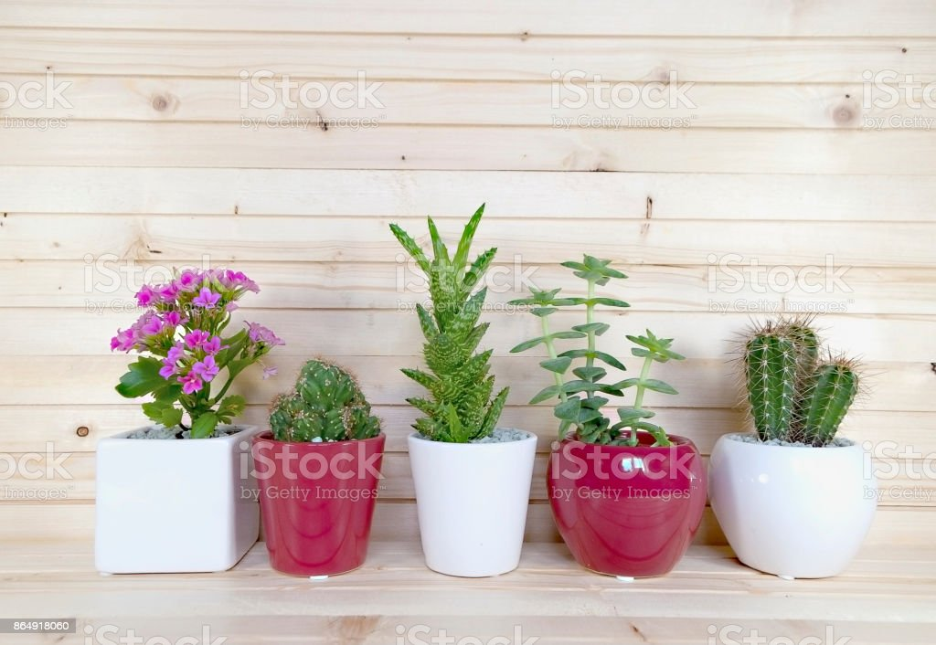 1Beautiful cactus in different type in pot with background yellow wood nature. stock photo