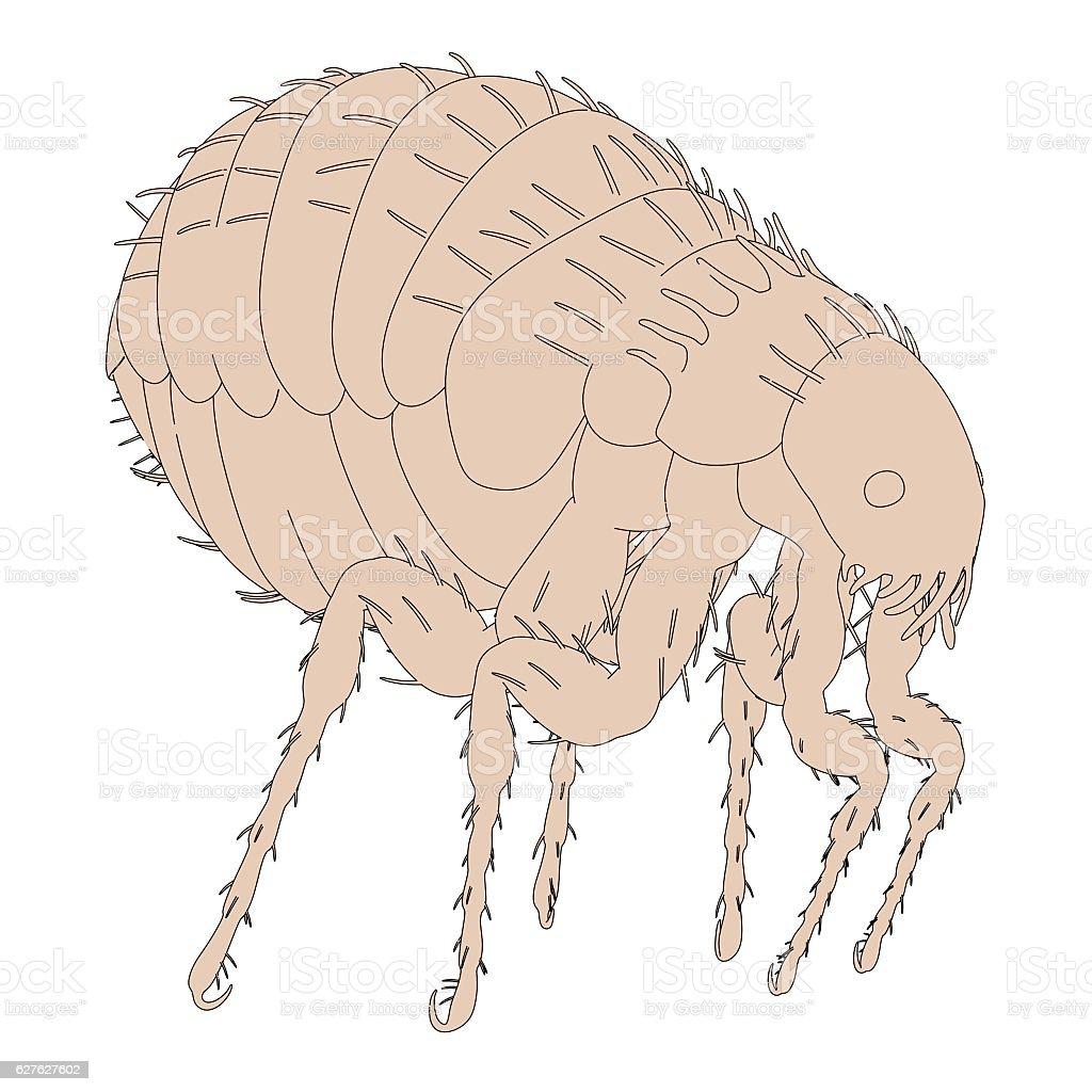 2d cartoon illustration of flea stock photo