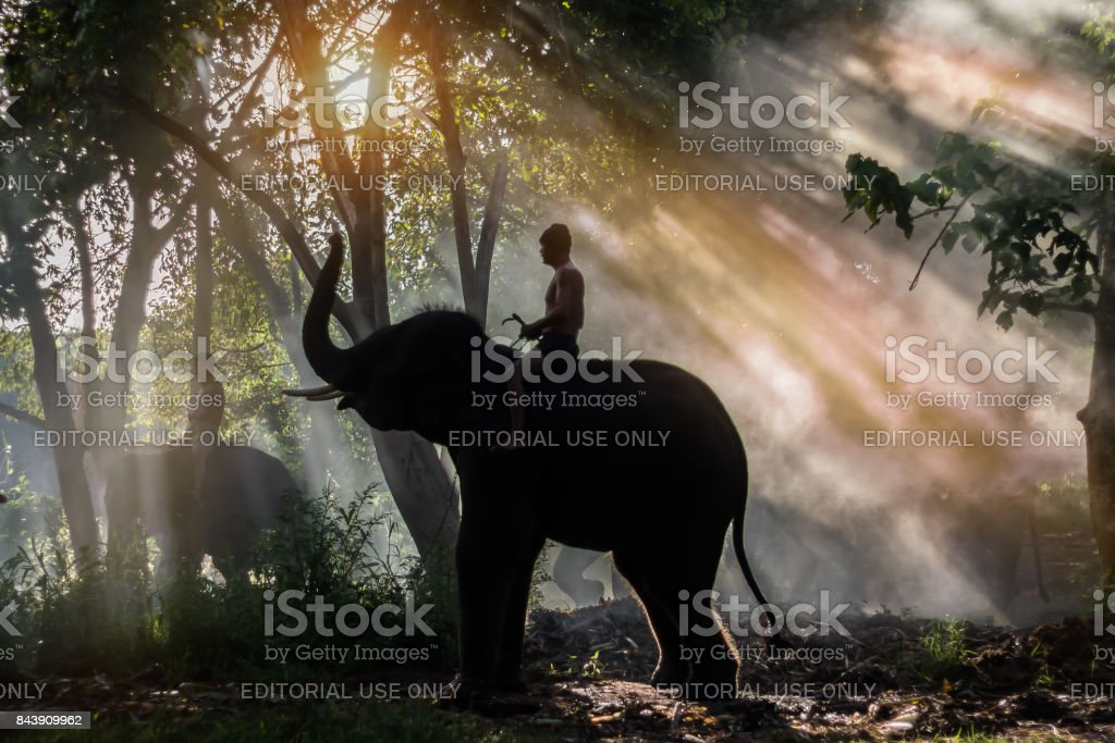 KANCHANABURI,THAILAND - SEPTEMBER 3,2017:The mahout elephant was feeding elephants in the morning.In CHANG PUAK CAMP Kanchanaburi, Thailand stock photo
