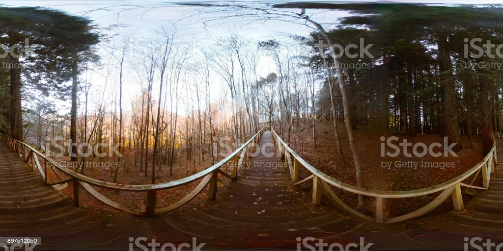 360-degree view of wooden walkway at forest stock photo
