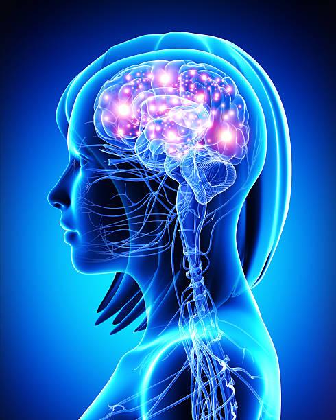 3d art illustration of female active brain stock photo