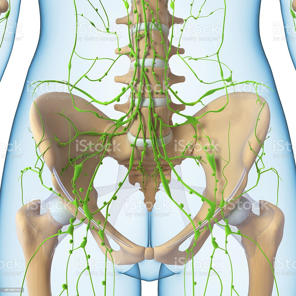 3d art illustration of  lymphatic system stock photo