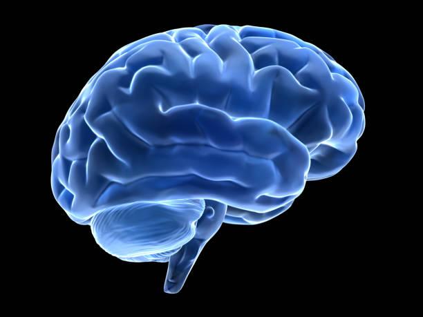 3d brain stock photo