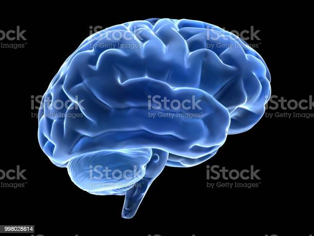 3d Brain Stock Photo - Download Image Now