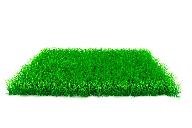 3d fresh green grass on white background 3d fresh green grass on white background turf stock pictures, royalty-free photos & images