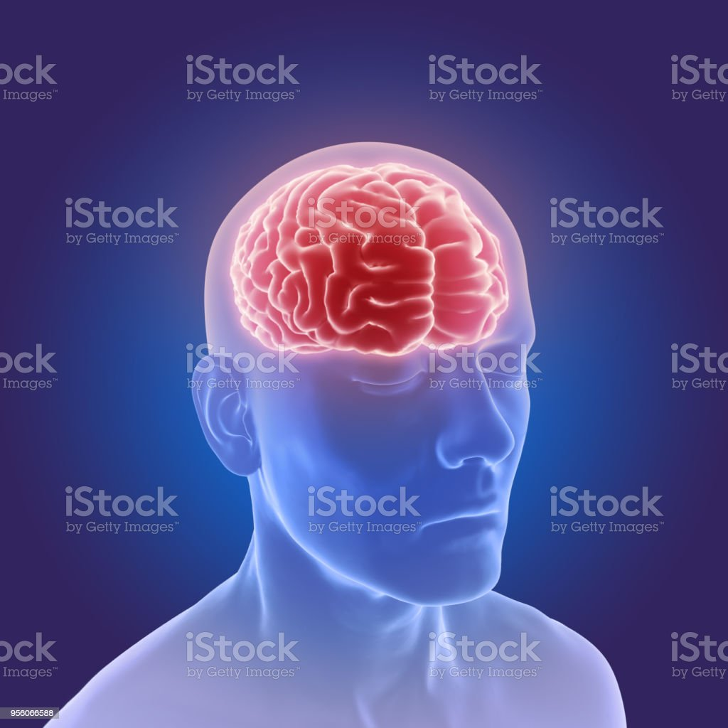 3d Graphic Of The Human Brain Anatomy Stock Photo & More Pictures of ...