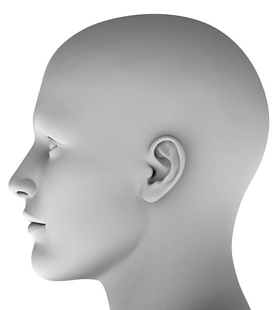 3d head isolated on white background hires ray traced 3d head isolated on white background hires ray traced  human head stock pictures, royalty-free photos & images