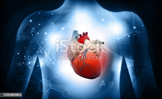 istock 3d human heart  medical anatomy 1035980904