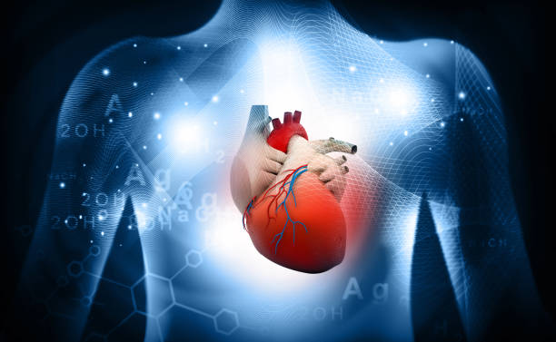 3d human heart  medical anatomy - cardiovascular system stock pictures, royalty-free photos & images