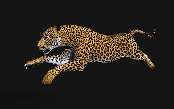 3D illustratie Luipaard, Panthera pardus, tijger foto