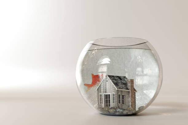 3d illustration of a fishbowl house isolated on white background - home aquarium stock photos and pictures