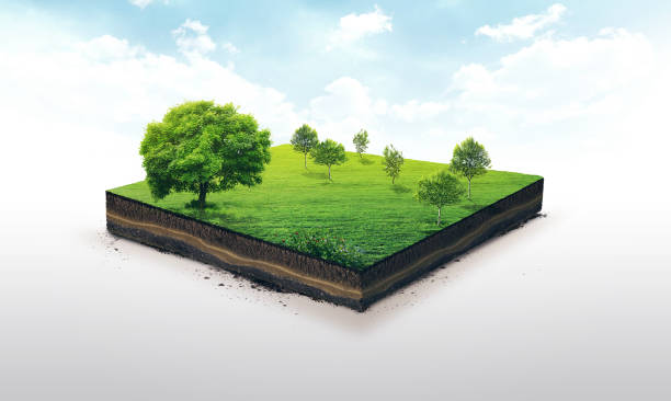 3d illustration of a soil slice, green meadow with trees isolated on white illustration for companies, artists, designers grounds stock pictures, royalty-free photos & images