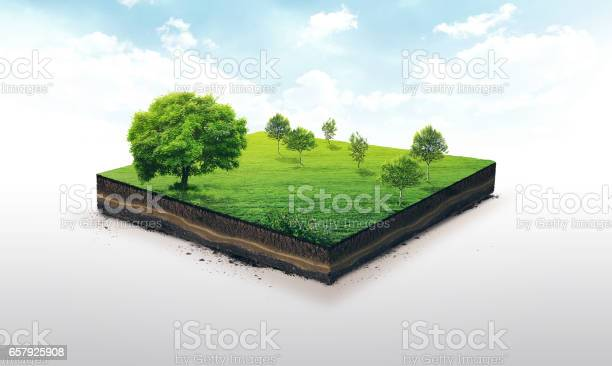 Photo of 3d illustration of a soil slice, green meadow with trees isolated on white