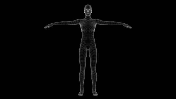 3d illustration of a woman xray hologram stock photo