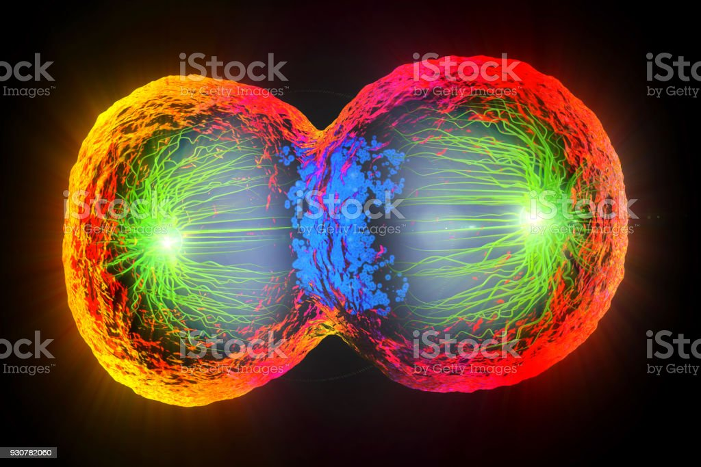 3d illustration of colorful cell division, cell membrane and splitting nucleus stock photo