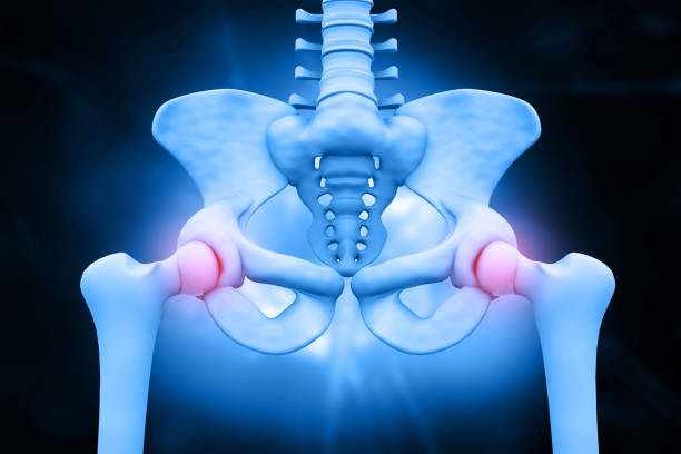 3d illustration of hip skeleton stock photo