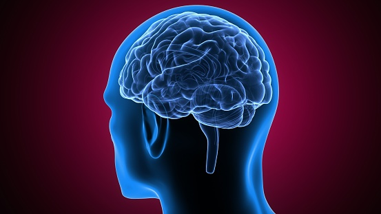3d Illustration Of Human Body Brain Anatomy Stock Photo ...