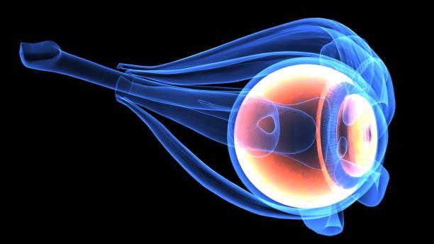 3d Illustration Of Human Body Eye Anatomy Stock Photo More