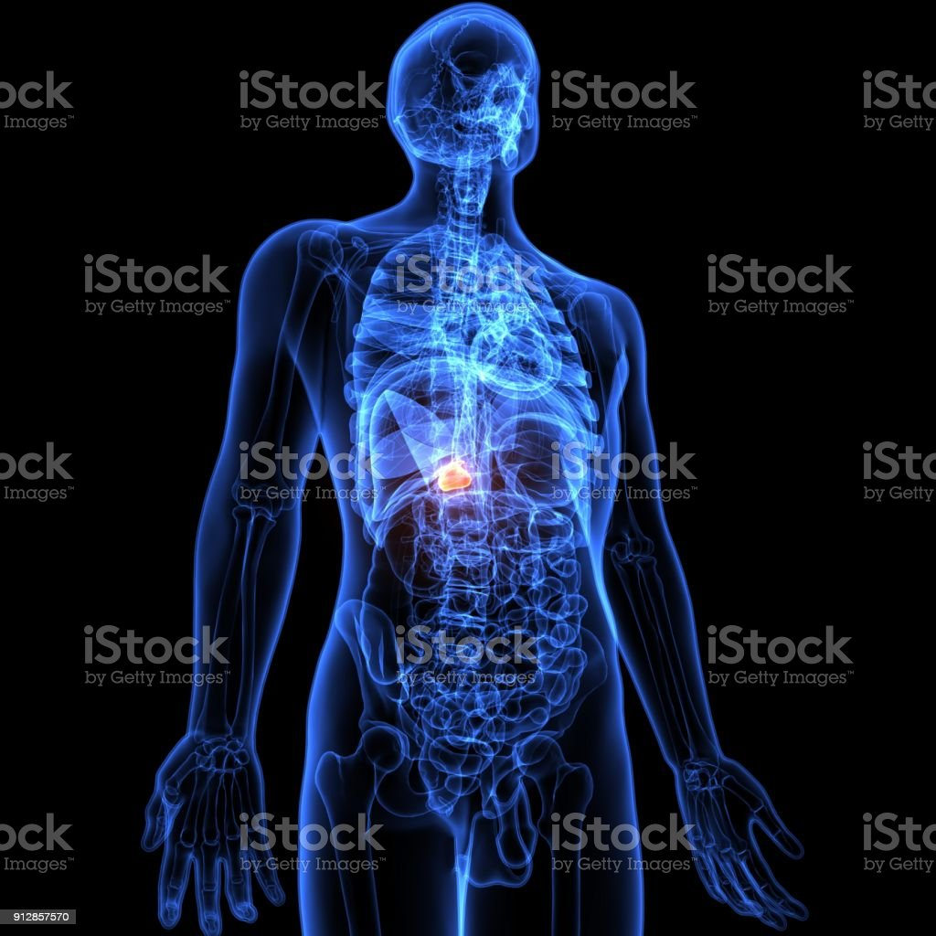 3d illustration of Human body Gallbladder anatomy stock photo