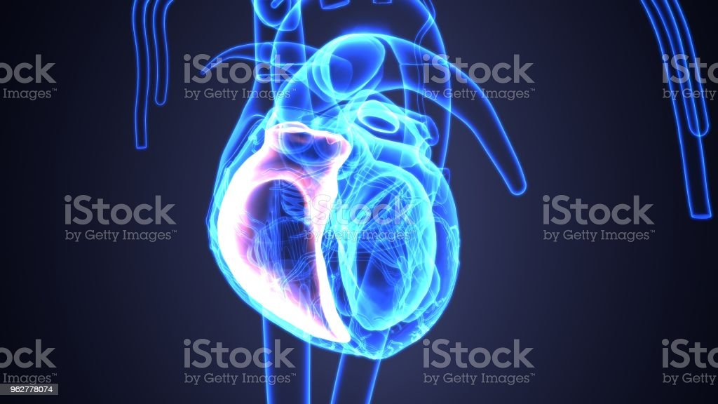 3d illustration of human body heart anatomy - Foto stock royalty-free di Accudire