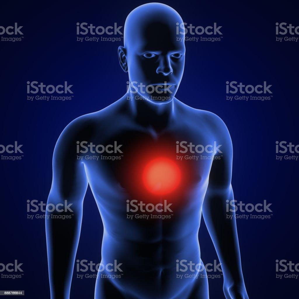 3d illustration of human body heart pain stock photo more pictures 3d illustration of human body heart pain royalty free stock photo ccuart Choice Image