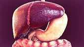 istock 3d illustration of human body organs anatomy 846252332