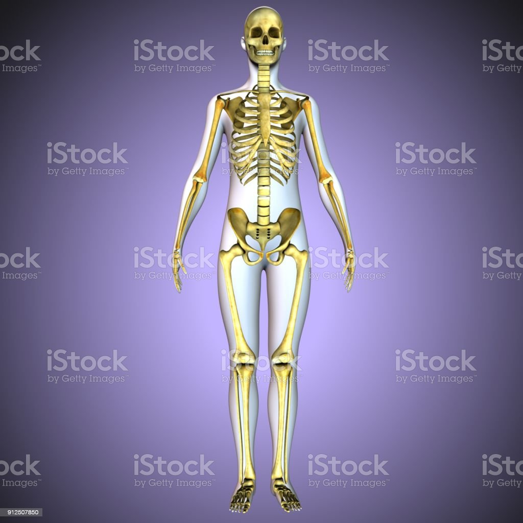 3d Illustration Of Human Body Skeletion Anatomy Stock Photo More